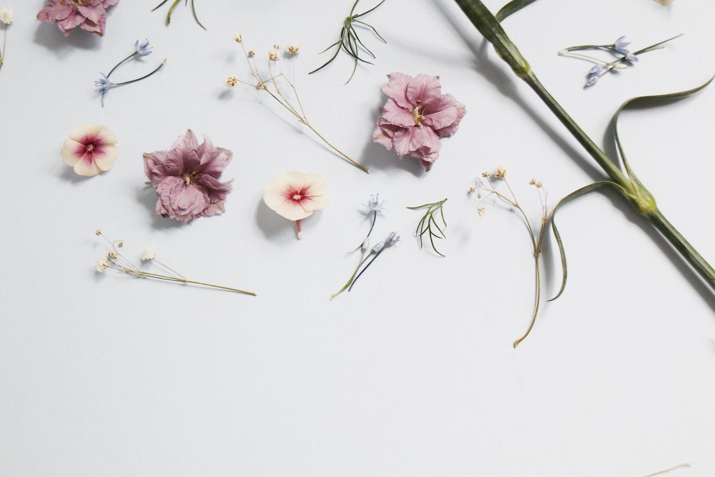 floral element design on a white background