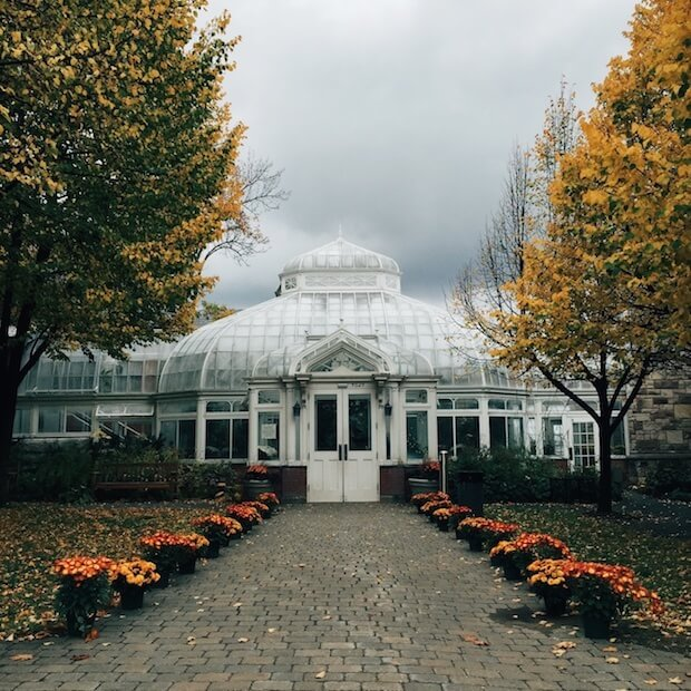 westmount conversatory and greenhouses best place to propose in montreal
